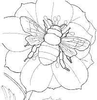 Bees Coloring Pages and Printable Activities