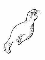 sea lion coloring page